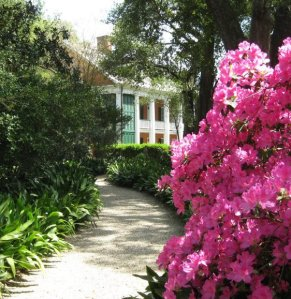 Azaleas at Shadows on the Teche in New Iberia, LA, image from facebook.com/ShadowsontheTeche