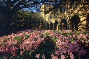 Azaleas and Oaks on the LSU Quadrangle. From artsci.lsu.edu