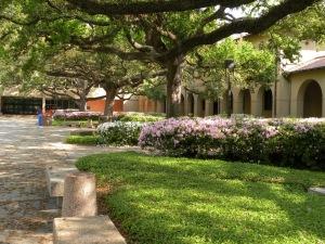 LSU Quadrangle. Image from Mary's Louisiana Garden blog