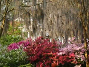Azaleas in City Park, New OrleansCopyright © Jay Combe