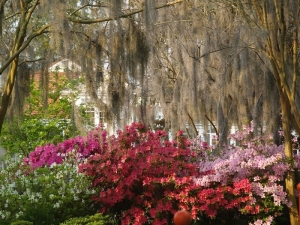 Azaleas in City Park, New OrleansCopyright © Jay Combe