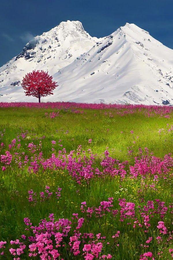 The Swiss Alps, photo via Polo Pixel
