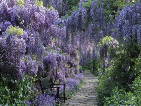 Wisteria (from Romancing the Bee)